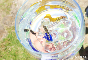 カゴカキグラス俯瞰mini.JPG