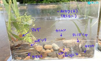 集合水槽.jpg