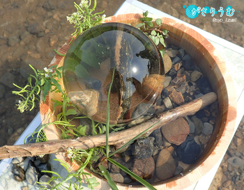水盆と滴2.jpg