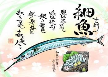 サケトモ-サヨリsiv.jpg